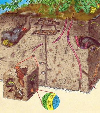 Морфология почв
